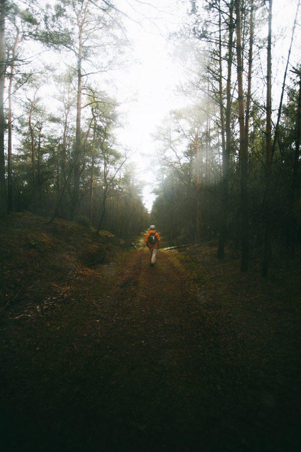 Fotoreis - Parc des Hautes Fagnes - België