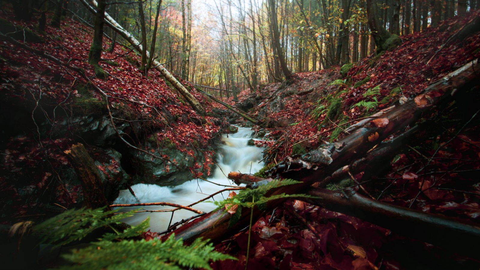 Fotoreis Belgie | Parc des Hautes Fagnes